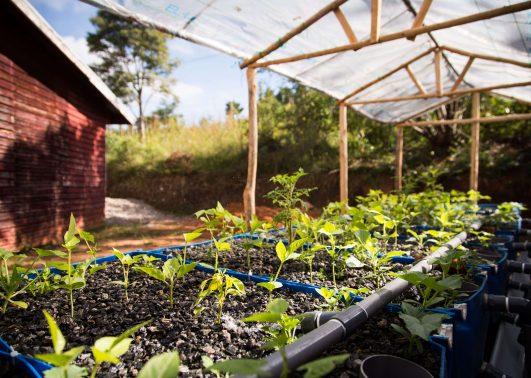 jordbruksavdelingens bevattning